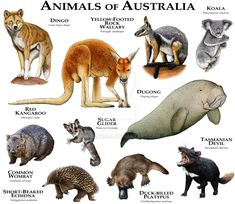 Animals of Australia by rogerdhall on DeviantArt