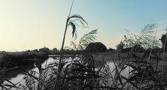 #nature #sky #green