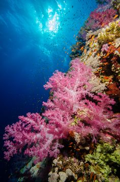 Soft Coral in the Red Sea byChristian S (Website) (FB Page)