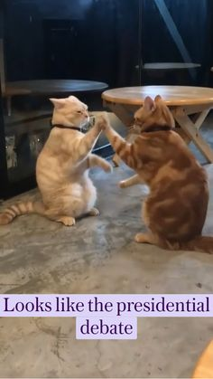 Funny Animal Jokes, Funny Cute Cats, Cute Baby Cats, Funny Cat Videos, Cute Little Animals, Cute Funny Animals, Cute Animal Photos, Cute Animal Videos, Funny Animal Pictures