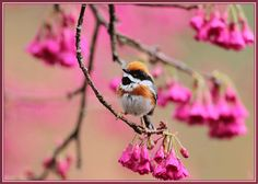 http://www.lovethispic.com/uploaded_images/81386-Animated-Spring-Bird.gif?1