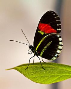 Butterfly By Vijay S Amazing World