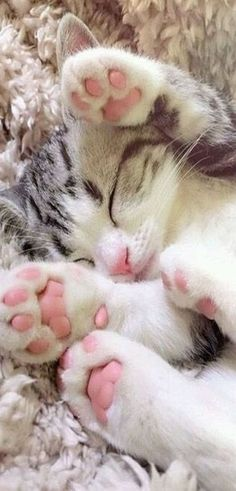 cute kitten paws