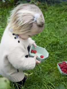 a wee berry picker.