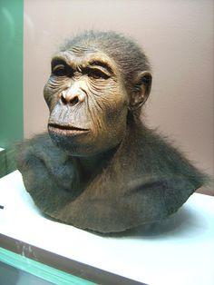 La mayor parte de los restos se han hallado en Kenia, en la localidad de Koobi Fora y en Tanzania, en la conocida Garganta de Olduvai. Algunos autores ponen en duda su pertenencia a Homo, conforme a una interpretación restrictiva de la diagnosis del género, y lo asignan o bien a Australopithecus o bien proponen que se defina un nuevo género para esta especie en el que se incluya también a Homo rudolfensis.