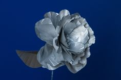 Crepe paper and tissue flower