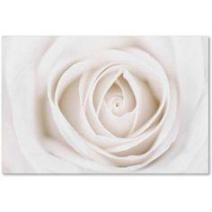 Trademark Fine Art 'White Rose' Canvas Art by Cora Niele, Size: 16 x 24, Multicolor