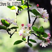 Rare Begonia semillas de flor hermoso jardín Bonsai perenne flor Malus Spectabilis Bonsai árboles semillas jardín de DIY - 10 unids(China (Mainland))
