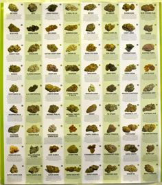Weed seeds, where to buy and what to look for when you want to grow your own cannabis indoors. Description from pinterest.com. I searched for this on bing.com/images