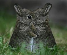 "Bunny Rabbits:  ""I have a secret to tell you..."""