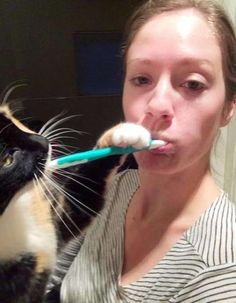 Or personal hygiene… | 19 Pictures That Prove Cats Truly Don't Give A Fuck