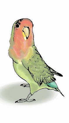 #ilustración #illustration #bird #pajaro #agapornis #dibujo #draw #gimp #inkscape
