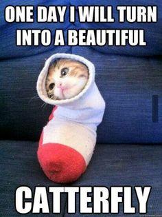 Funny pet memes, cute animal memes, cute animal pictures, funny pictures, a Cute Animal Memes, Funny Animal Quotes, Animal Jokes, Cute Funny Animals, Funny Cute, Funniest Animals, Cat Quotes, Super Funny, Animal Fails