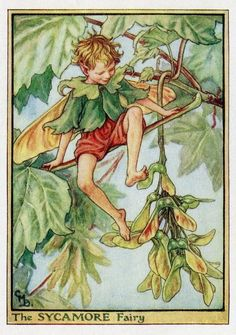 This beautiful Sycamore Flower Fairy Vintage Print by Cicely Mary Barker was printed c.1950 and is an original book plate from an early Flower Fairy book...