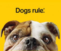 "Lee Clow for Pedigree; ""Dogs Rule"" campaign"