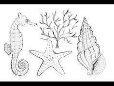 Nautical Sea Life Drawings | How to Draw Starfish Coral Seahorse & Seash...