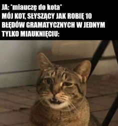 9gag Funny, Funny Cat Memes, Funny Laugh, Funny Cats, Hilarious, Memes Humor, Funny Humor, Funny Picture Quotes, Funny Cat Pictures