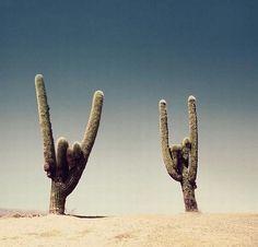 this desert is so fucking metal