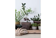 Plants, Projects, Log Projects, Blue Prints, Plant, Planets