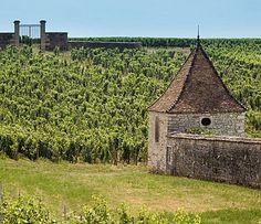 Beaune bourgogne vineyard - Pesquisa Google