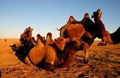 The Gobi heartlands tour - tour to Gobi Desert