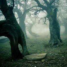 Winter trees by vbagiatis on DeviantArt