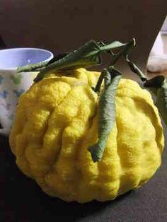獅子柚子の甘煮