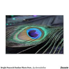 Bright Peacock Feather Photo Poster Art Print