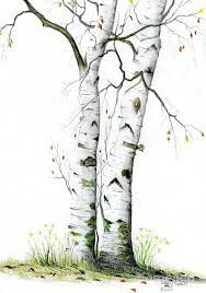 White Birch by Mary Tuomi White Birch Painting - White Birch Fine Art Print Watercolor Trees, Watercolor Landscape, Landscape Art, Landscape Paintings, Watercolor Paintings, Encaustic Painting, Watercolours, Birch Tree Art, White Birch Trees