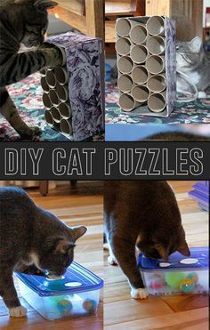 9 DIY Projects for Cat Owners to Make Your cat will love this homemade cat scratcher that you can make and save on expensive cat tree.  A bit of cardboard and an old t-shirt, and you've got a clever DIY cat tent.  Engage your kitty's curiosity with a DIY kitty play station Your … #cattentcardboard #diycattenttshirts