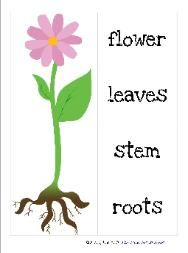 Free Garden Preschool Pack from Homeschool Creations