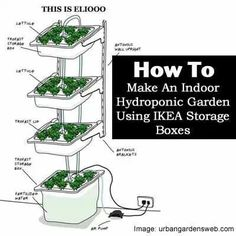 1000 images about hydroponics on pinterest for Indoor gardening nutrients