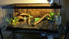 Just built a bioactive vivarium for a ball python! Terrarium Tank, Snake Terrarium, Reptile Room, Reptile Cage, Leopard Gecko Habitat, Snake Cages, Snake Enclosure, Classroom Pets, Pond Animals