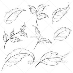 Leaves, Contours by OK-SANA Leaves of various plants, set vector contours on a white background Vector EPS 8 plus AI CS 5 plus high-quality Jpeg. Pencil Art, Pencil Drawings, Art Drawings, Contour Drawings, Charcoal Drawings, Drawing Faces, Leaf Drawing, Painting & Drawing, Floral Drawing