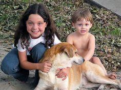 Educa a tu perro sin violencia La educación no traumática
