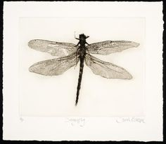 "Drypoint engraving 8"" X 9.5"" Edition of 2 - Sarah Gillespie"