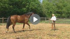 Vorbereitende Übungen für das Verladen Equestrian, Cowboy Hats, Horses, Videos, Exercises, Animals, Horseback Riding, Badge, Love