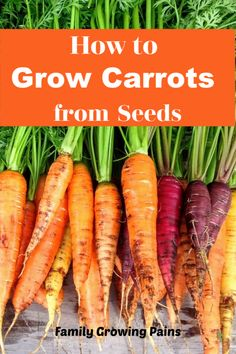 How to Grow Carrots: What You Need to Know Carrots are a spring and fall root crop for your vegetable garden. Carrots are easy to grow, even for new gardeners. Learn how to grow carrots here. Growing Veggies, Planting Vegetables, Organic Vegetables, Vegetable Gardening, Planting Onions Bulbs, Growing Carrots From Seed, Planting Carrots Seeds, Fall Vegetables To Plant, Gardens