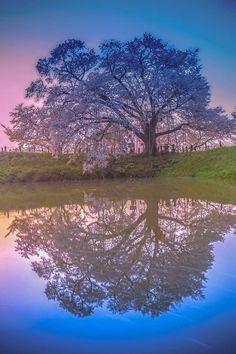 lifeisverybeautiful:  Cherry Blossom, Fukuoka, Japan by Junji Higashi via TOKYOCAMERACLUB