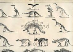 Fossil Vertebrates - Antique Extinct Animals - O. Dinosaur Images, Dinosaur Design, Dinosaur Art, Future Earth, Extinct Animals, Vertebrates, Animals Images, Ancient Civilizations, Prehistoric