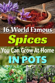 Growing Spices at home is possible! There're 16 spices that you can grow in the garden or in your apartment balcony in pots. Growing Spices at home is possible! There're 16 spices that you can grow in the garden or in your apartment balcony in pots. Outdoor Plants, Outdoor Gardens, Potted Plants, Outdoor Spaces, Aesthetic Header, Gemüseanbau In Kübeln, Spice Garden, Organic Horticulture, Container Gardening Vegetables