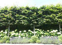 Hedera, leilindes, hortensia's, lavendel,  buxusbollen samen in een verhoogde border. Garden Inspiration, Outdoor Living, Pergola, Home And Garden, Backyard, Landscape, Plants, Pictures, Gardens