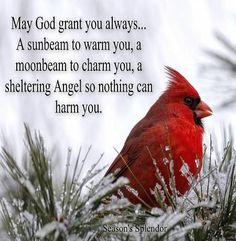 Cardinal Prayer