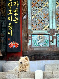 Temple dog at Beomeosa in #Busan #Korea