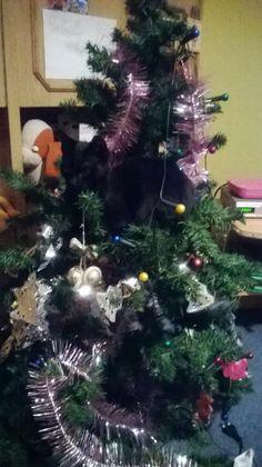 Szofi and the christmastree :D