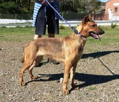 ACE Animal Care España - De refugio bezoeken Doge, Pet Care, Charity, Animals, Shelters, Animaux, Animal, Animales, Animais