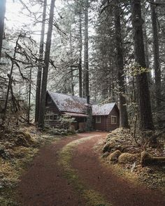 Cabin house in the forest woods