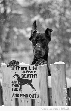 Se você quer conhecer a vida após a morte, pule a cerca!!!!!