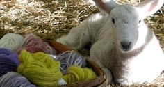 Montadale Baby: two-ply, woolen spun, great for baby things with 10% added to improve washability.