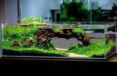 Planted Aquarium, Aquarium Garden, Aquarium Landscape, Tropical Fish Aquarium, Aquarium Fish Tank, Fish Tank Terrarium, Garden Terrarium, Turtle Aquarium, Nano Cube